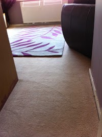 Local Carpet and Upholstery Cleaning 350621 Image 0